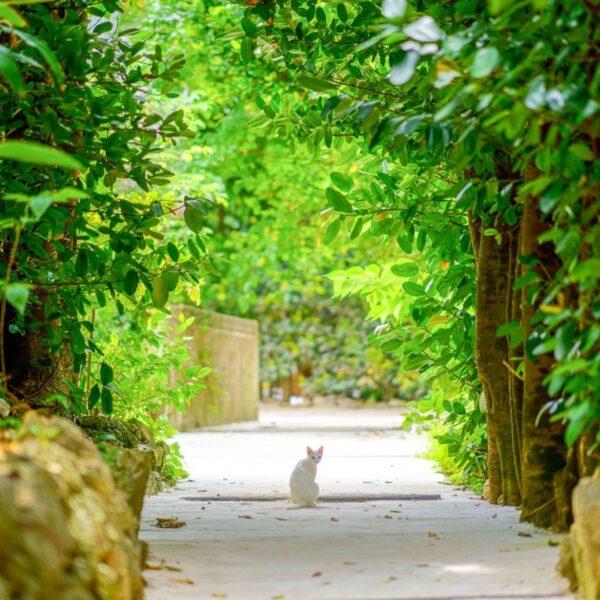 HIDEOUT OKINAWA URUMA | Okinawa Condominium Resort Hotel